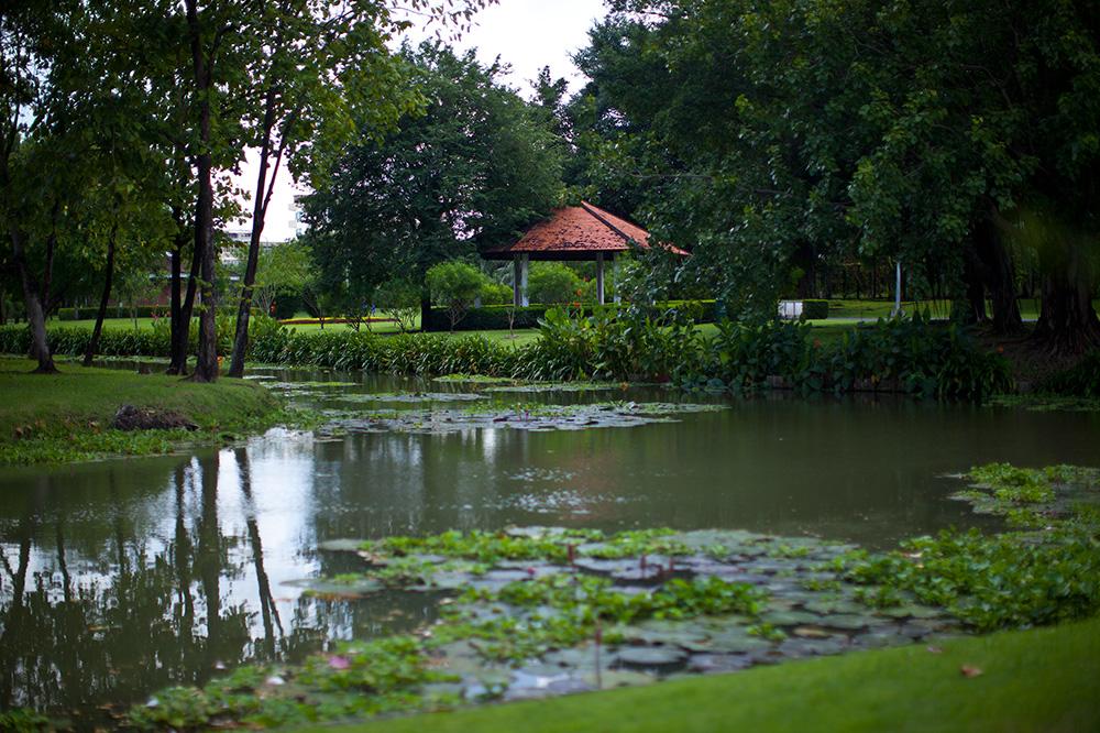 В общественном парке Суан Луанг очень красиво. По тайским меркам - ничего особенного, но я не перестаю восхищаться - пагодами, живыми варанами, лотосами и поющими птицами.