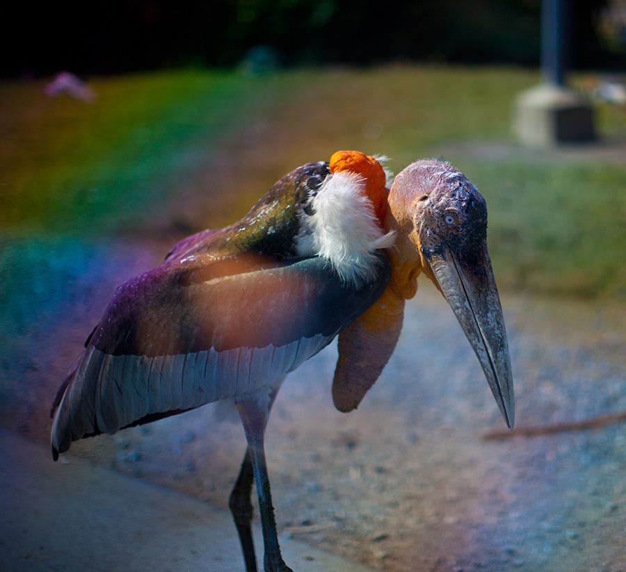 Фееричной красоты и уродства одновременно птицы, встречают вас на входе
