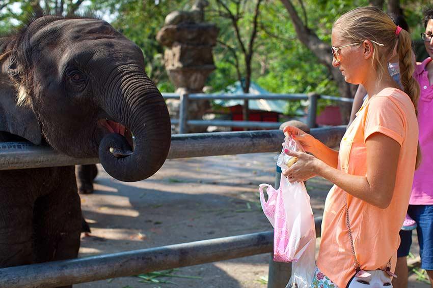 любимые слоны