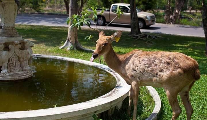 зоопарк кхао кхео фото паттайя