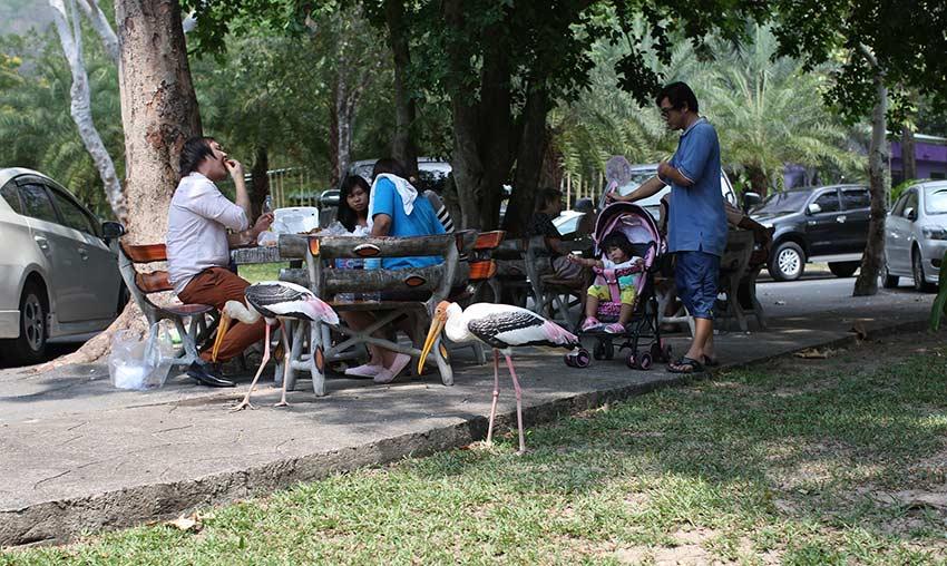 такие же птички есть в сафари парке в Бангкоке