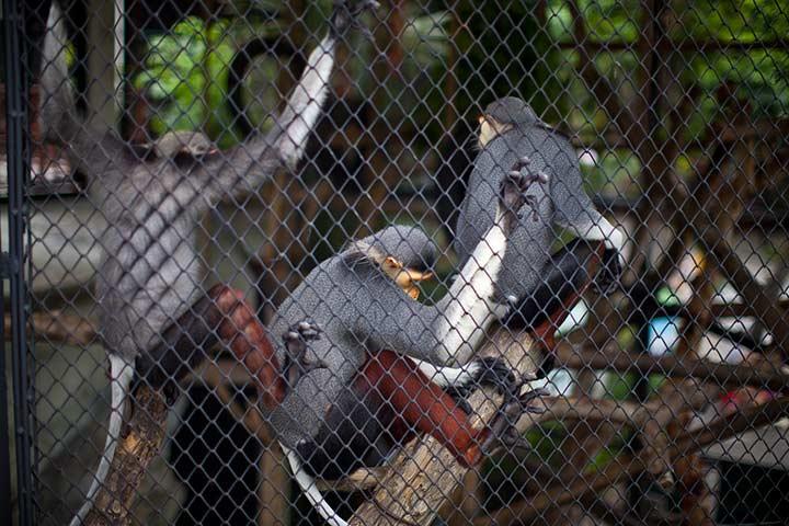 обезьяны в тот день фотографироваться не желали