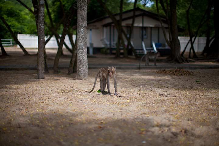 обезьяны