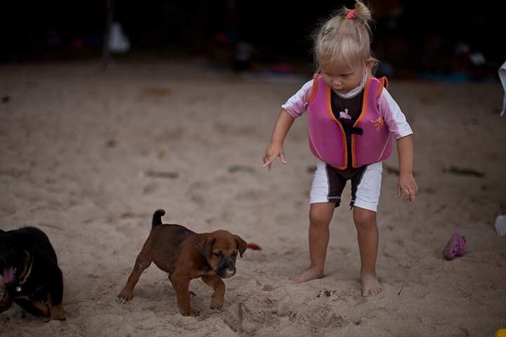 щеночки на пляже Кози Бич фото