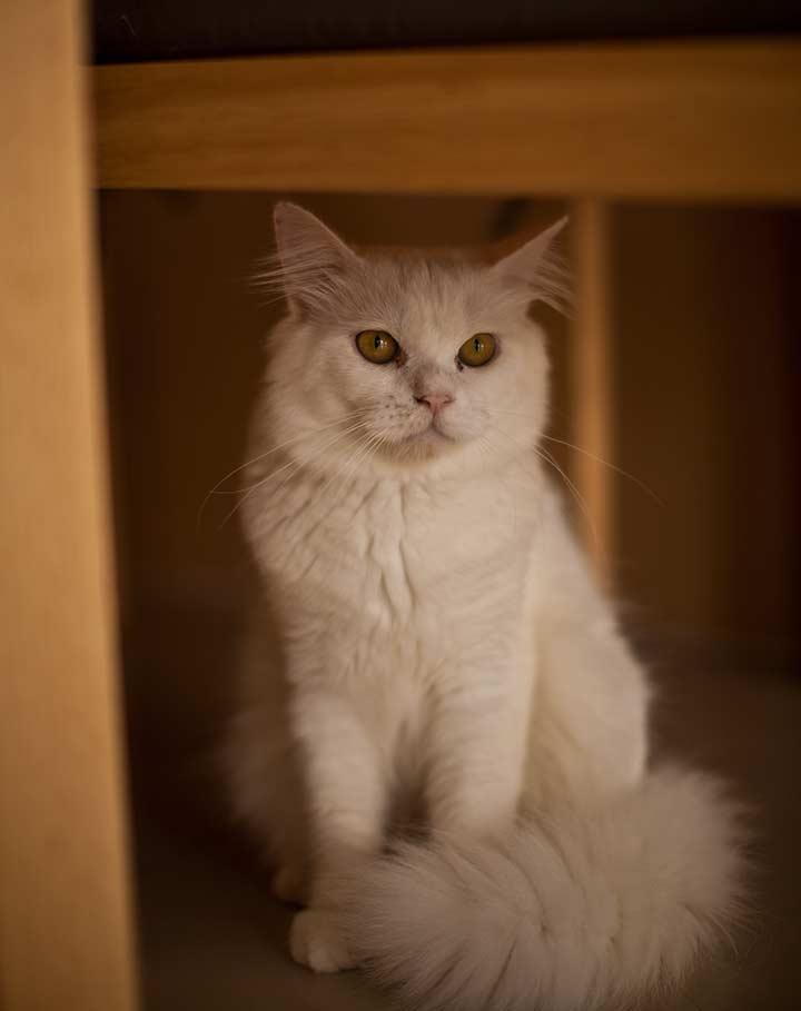 кошачье кафе фото
