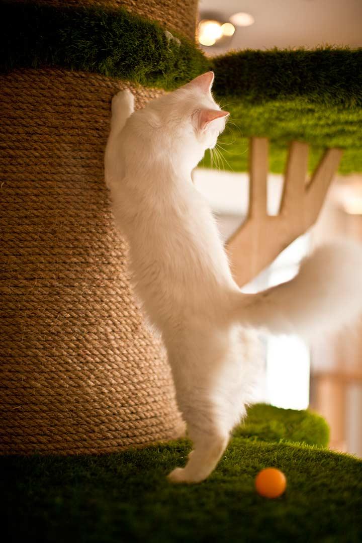 у котов здесь есть все. От вкусной еды до замысловатого дерева с мостиками