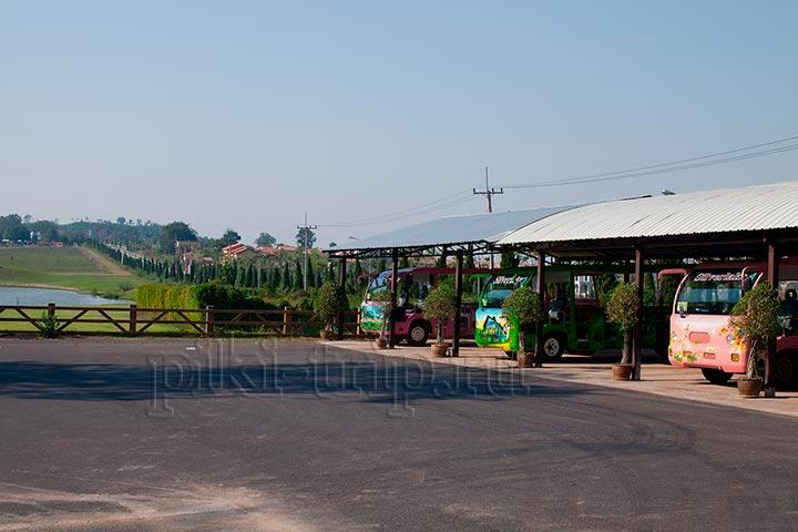 автобусы ждут новых гостей виноградника
