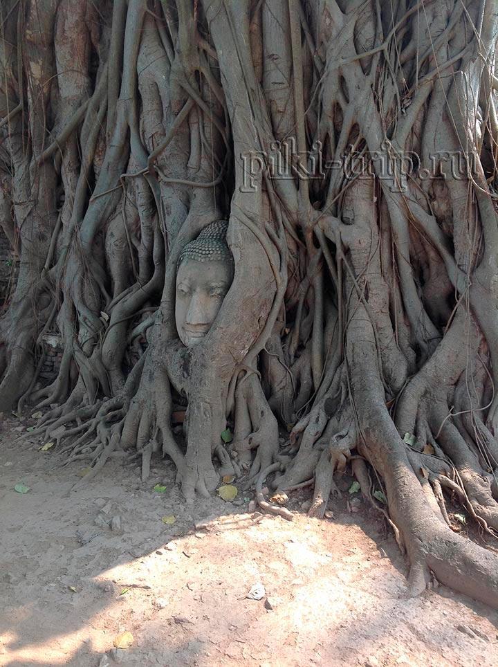 Будда в корнях дерева