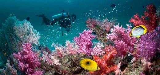 андаманские коралловые рифы