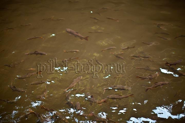 вода чистая, а рыб много!