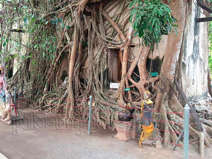 дерево Бодхи вокруг храма