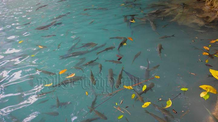 рыбки в вдопаде