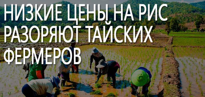 Низкие цены на рис разоряют Тайских фермеров