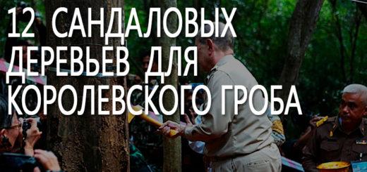 12 сандаловых деревьев для царского гроба