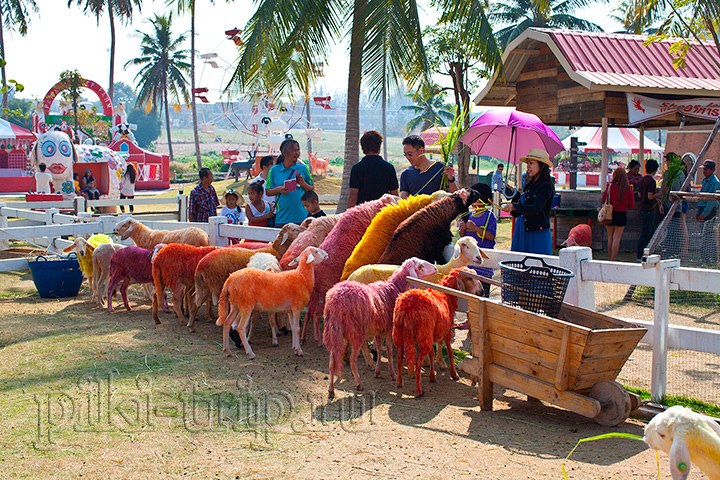Фото Паттайи - овечья ферма