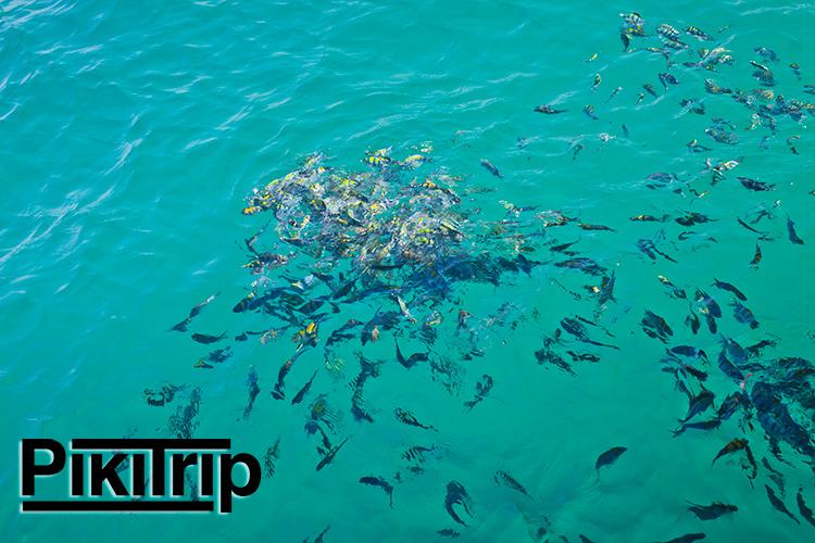 рыбы море!
