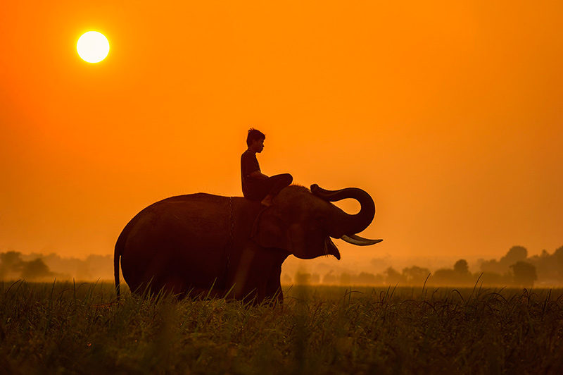 слоны и предметы из них