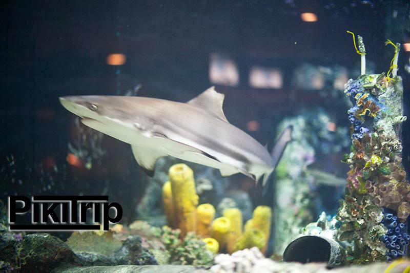 аквариум Районга