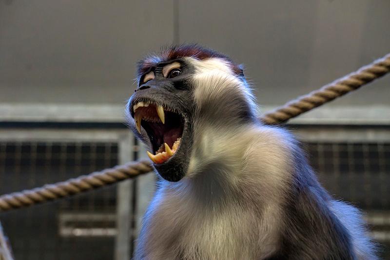 Укусила обезьяна в Таиланде - Что делать?