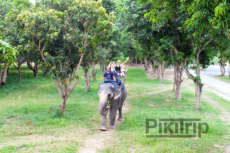 катание на слонах никогда не надоест