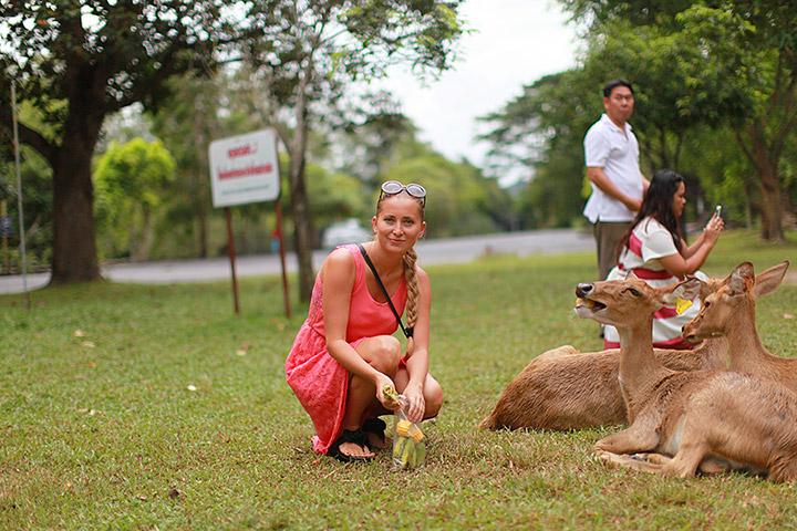 ручные олени в Кхао Кхео