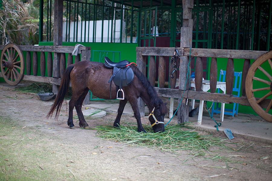катания на лошади Паттайя фото