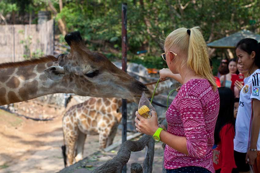 Маша кормит жирафа, обычно она это делать боится