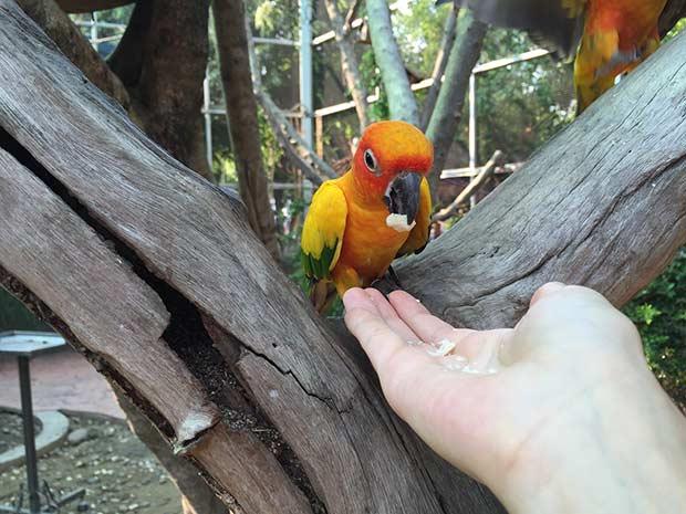 ручные попугаи на ферме