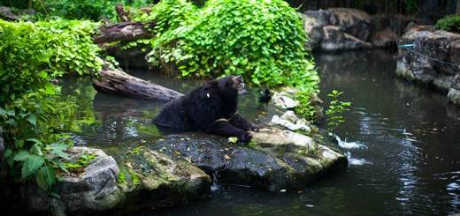 Зоопарк в Бангкоке - Dusit Zoo ( зоопарк Дусит) фото
