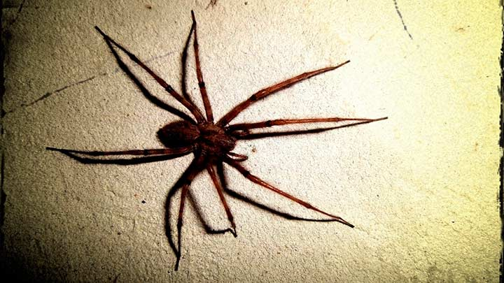 паук выглядел примерно вот так. Сфотографировать не успела.