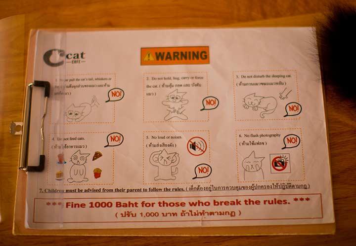 правила кошачьего кафе в Паттайе фото