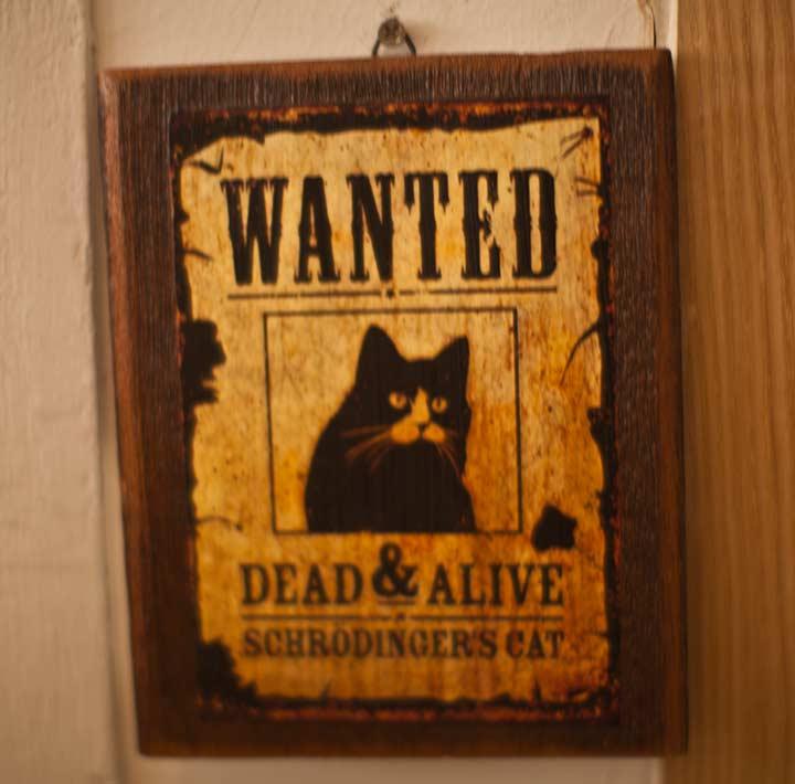 найти живым или мертвым!
