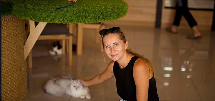 кошачье кафе в Паттайе фото