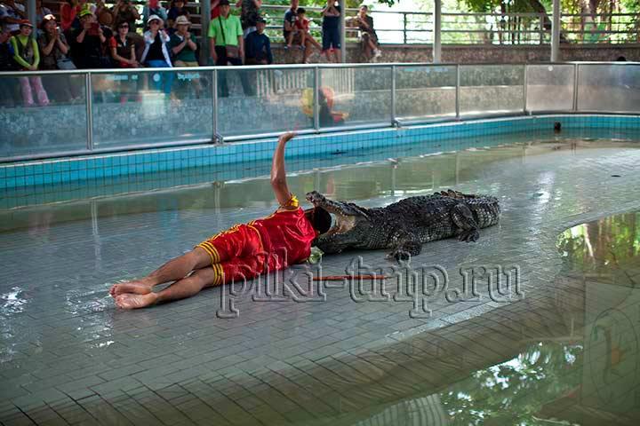 крокодиловая ферма в Паттайе и парк миллионолетних камней фото