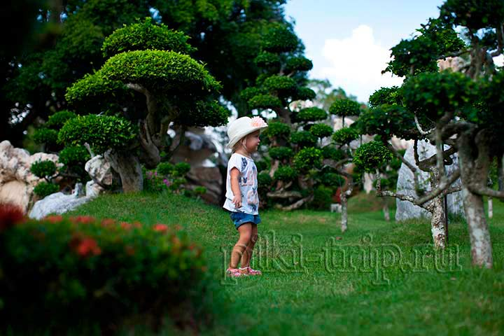 Овечья Ферма в Паттайе - Экскурсии и цены Таиланда в 2020 году