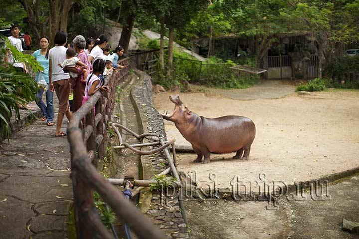 достопримечательности паттайи - зоопарк КхаоКхео