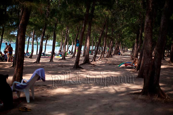Казуарины на Хат Нанг Рам просто шикарно выручают и дают обширную постоянную тень