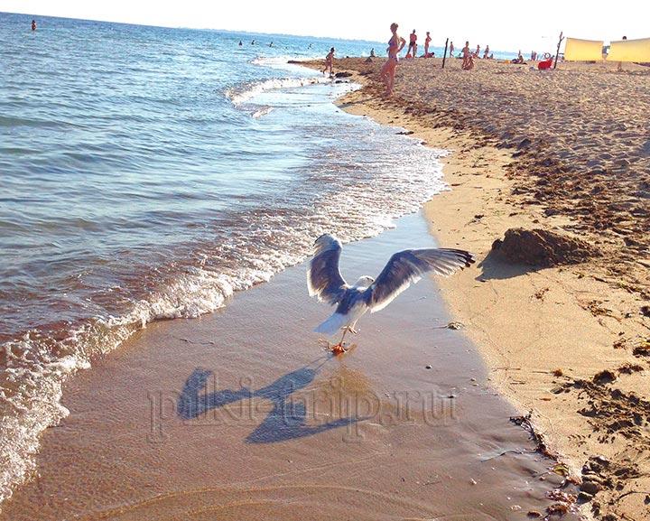 вход на пляж приморье