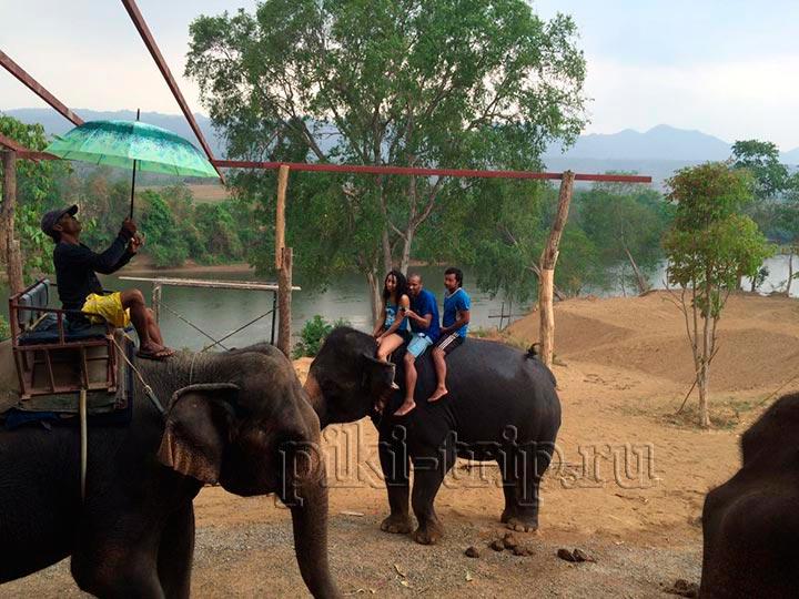 катание на слонах всегда здорово!катание на слонах всегда здорово!