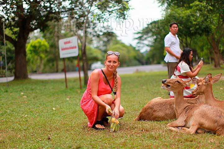 Фото Паттайи - зоопарк Кхао Кхео