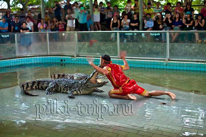Фото Паттайи - крокодиловая ферма
