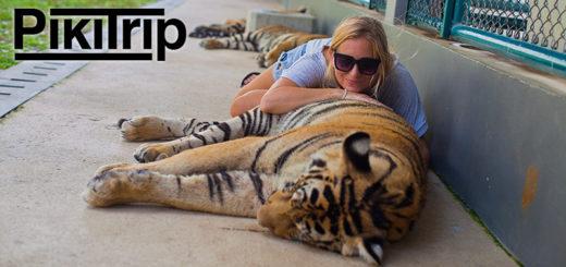 Новая экскурсия в Тигровый парк и Нонг Нуч