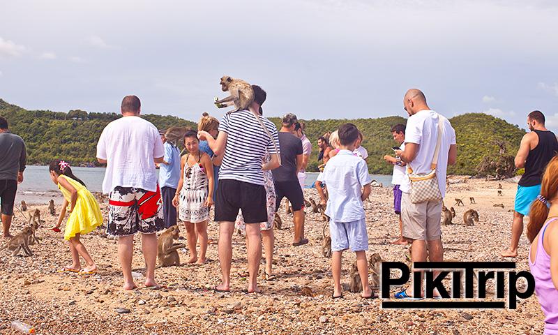 обезьяны на острове Кхо Пхэд
