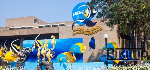 Аквариум в Районге - Rayong Aquarium - Советы и Отзывы