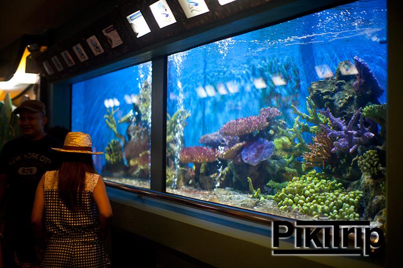 аквариум в Районге