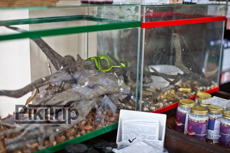 сад специй - рядом с товарами на основе яда и жира змей, настоящая змея