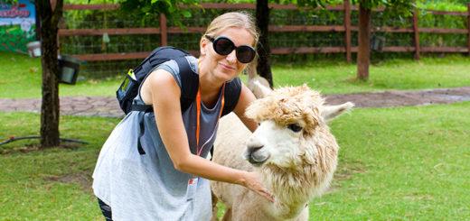 экскурсия Альпака Парк земля королей