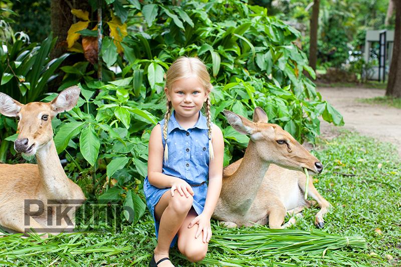 олень Лира в Кхао Кхео