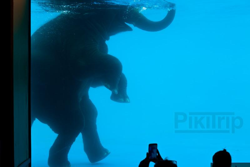 купание слонов в зоопарке Кхао Кхео