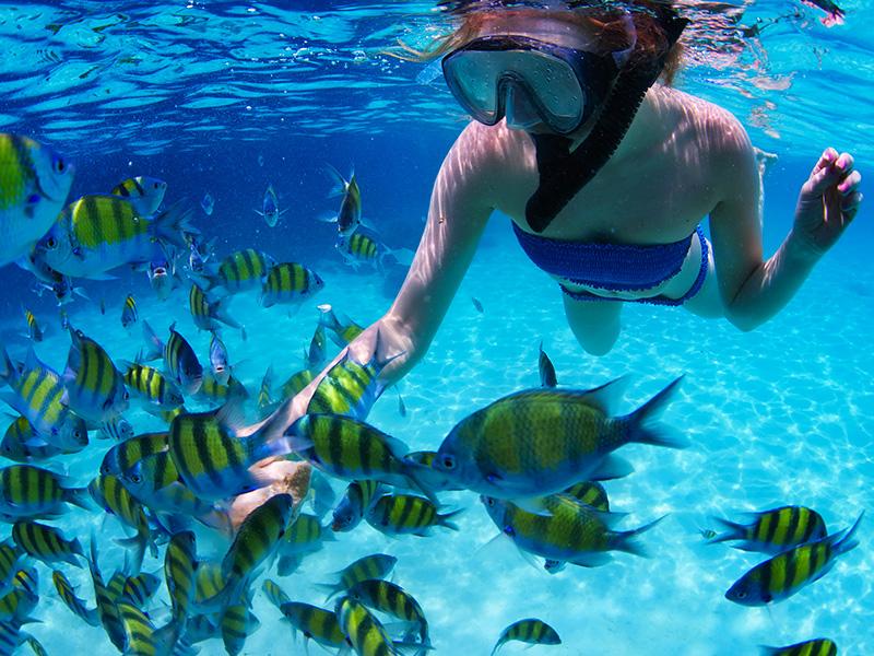 рыбки на острове